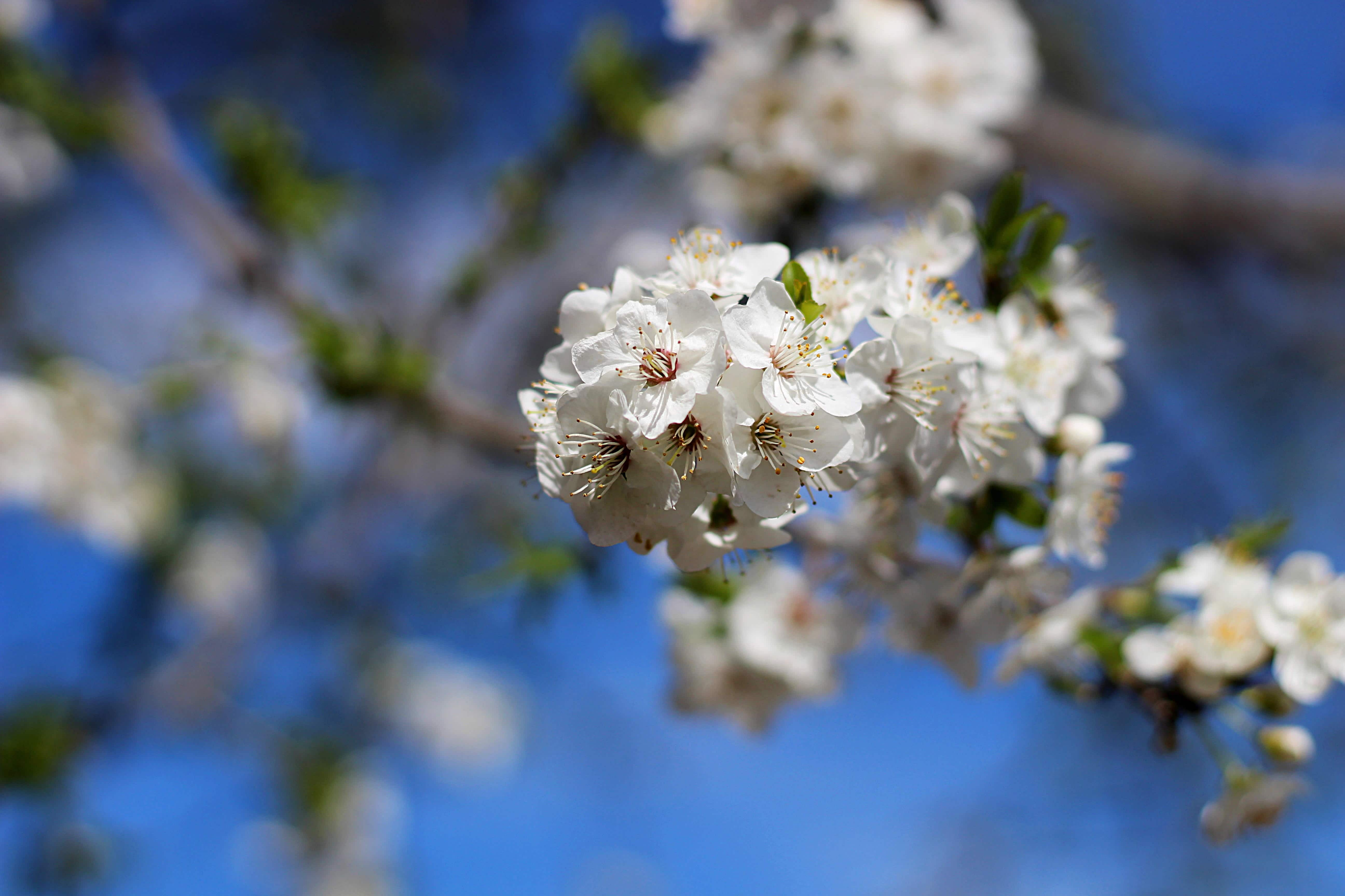 Sezgin Flowers